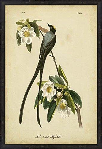 Audubon Fork John James (Audubon Fork-tailed Flycatcher by John James Audubon Framed Art Print Wall Picture, Espresso Brown Frame, 26 x 38 inches)