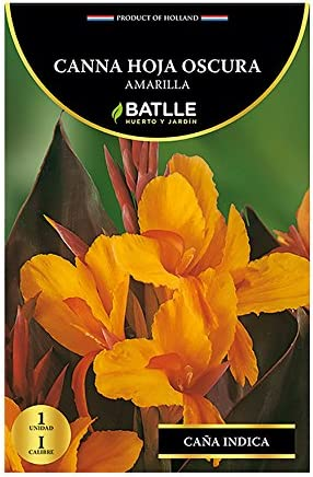 Bulbos - Canna hoja oscura amarilla - Batlle: Amazon.es: Jardín