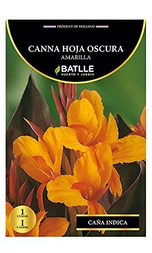Bulbos - Canna hoja oscura amarilla - Batlle Semillas Batlle 076309BOLS