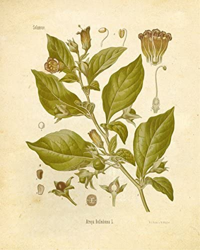 home, kitchen, wall art,  posters, prints 5 image Botanical Prints Vintage Wall Art Magical Herbalism Witchcraft promotion
