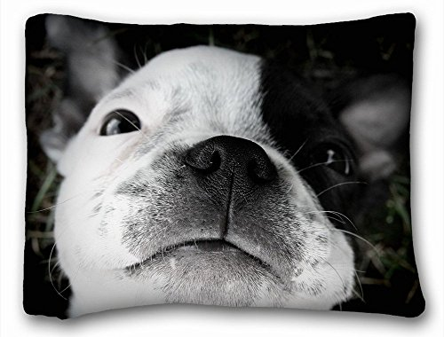 Boston Standard Sham - Decorative Standard Pillow Case Animals Boston Terrier puppy sleep. 20