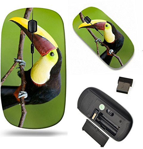 MSD Wireless Mouse Travel 2.4G Wireless Mice with USB Receiver, Noiseless and Silent Click with 1000 DPI for notebook, pc, laptop, computer, mac book design: 6870644 Chestnut mandibled Toucan or (Chestnut Mandibled Toucan)