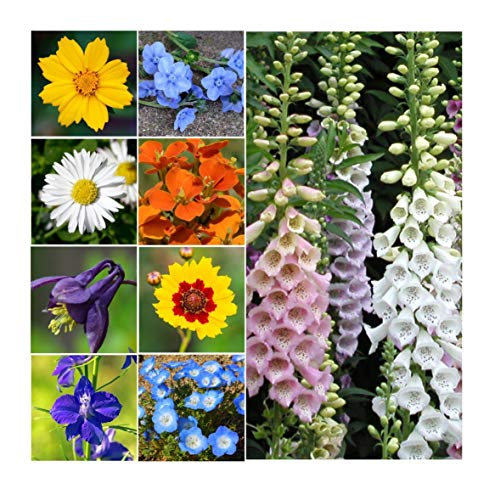 Partial Shade Wildflowers - 25 Varieties and Annual and Perennial Flowering Plants .5 Oz. ()