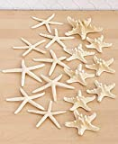 The Lakeside Collection Set of 16 Starfish