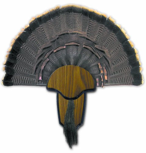 Hunters Specialties H.S. Strut Turkey Tail & Beard Mounting ()