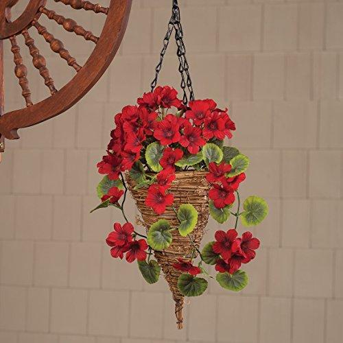 Buy cone flowers plants