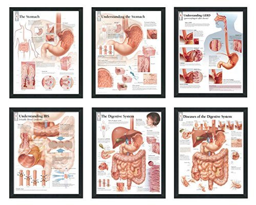 set of 6 framed medical posters the stomach understanding the