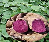 2015 High Quality.100 Seeds/Pack.Annual Fruit and Vegetable Seeds Molokai Purple Sweet Potato.DIY Home Garden&Bonsai Plant Seeds