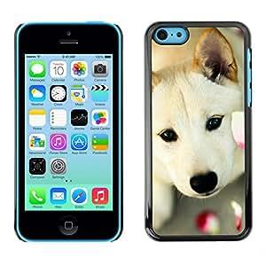 Paccase / SLIM PC / Aliminium Casa Carcasa Funda Case Cover - Great Pyrenees Canaan Dog Pet - Apple Iphone 5C