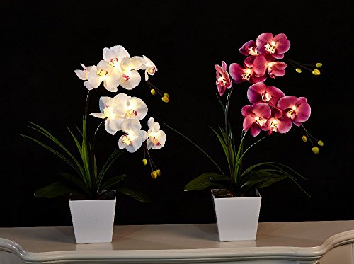 FANStek 2AA LED Lighted Artificial Orchid Arrangement-Battery Operated Orchid Pot with 9 Lights (White)