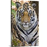 Canvas On Demand Premium Thick-Wrap Canvas Wall Art Print Entitled Bengal Tiger (Panthera Tigris Tigris) in a Forest, India