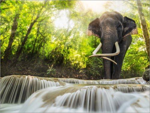 Posterlounge Tableau en PVC 80 x 60 cm Asian Elephant de Editors Choice