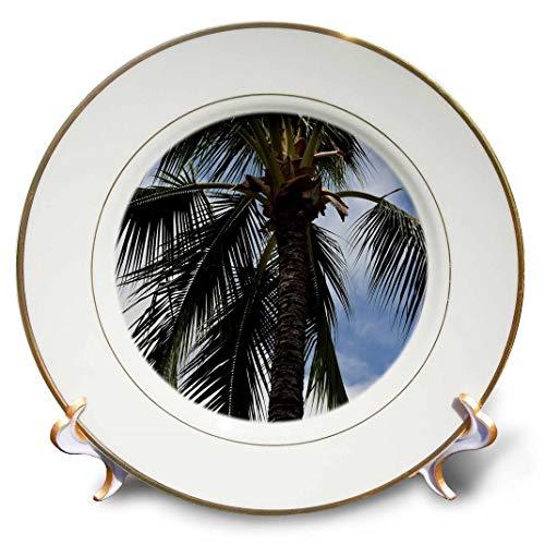 3dRose cp_192722_1 Kauai Palm Tree Porcelain Plate, 8-Inch ()