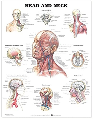 Head And Neck Anatomical Chart 9781587791482 Medicine Health