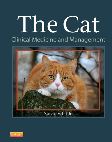 Little Cat - The Cat: Clinical Medicine and Management