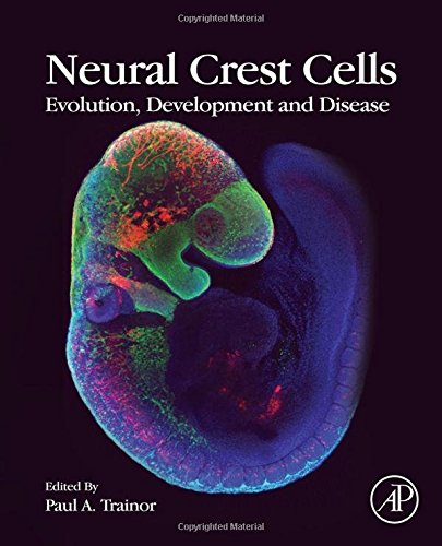 Neural Crest Cells: Evolution, Development and Disease