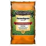 Pennington Seed 1 lb Bermuda grass Seed