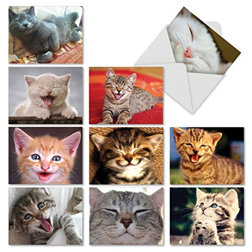 (Kitten Themed Note Cards (Box of 10) - Assorted Cat 'Smitten Kitten' Blank Greeting Cards with Envelopes - Adorable All Occasion Cat and Animal Stationery 4 x 5.12 inch - NobleWorks M6485OCB)