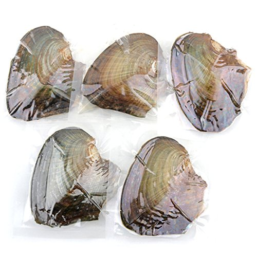 Violet Freshwater Cultured Pearl - Faylagee-yx 5 PC Vacuum Packed Oysters with Freshwater Oval AA Cultured Pearls(7.5-8mm)