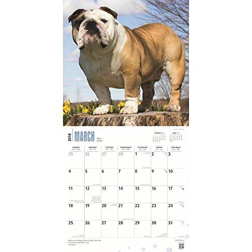 Bulldogs 2018 Wall Calendar Photo #2