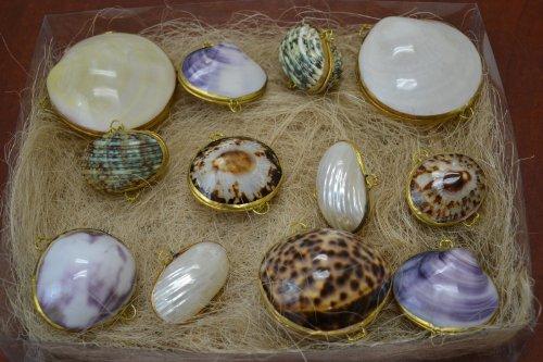 (12 Pcs Assort Sea Shell Storage Trinket Box Coin Purses #Cp-11)