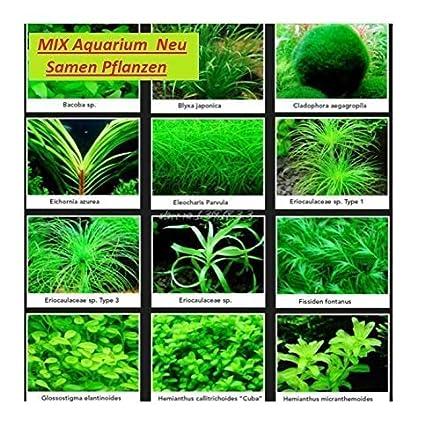 30 acuario habitaciones de semillas de plantas de la semilla de la mezcla novedad Casa #