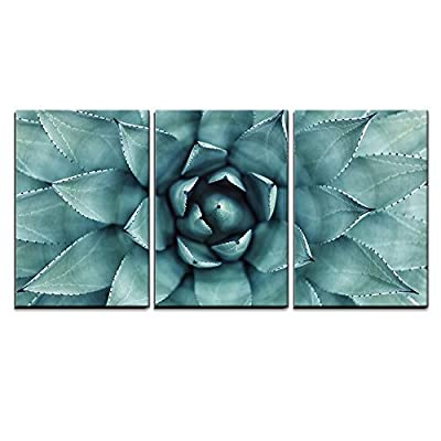 Marvelous Expert Craftsmanship, Quality Artwork, Sharp Pointed Agave Plant Leaves x3 Panels