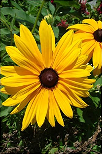 maryland state flower black eyed susan journal 150 page lined