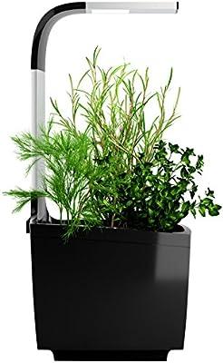 Tregren T3 Potager Du0027intérieur Connecté 3 Plantes, Kit Prêt à Pousser Et  Jardinière Autonome Pour Herbes Aromatiques, Petits Légumes, Fleurs    Cultivez Avec ...