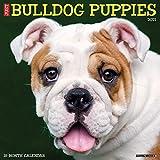 Just Bulldog Puppies 2021 Wall Calendar (Dog Breed Calendar)