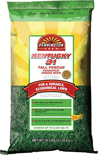 Kentucky 31 Fescue Seed - 7