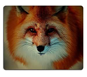 Red Fox Canids Dogs Wildlife Animals Mouse Pads Customized Made to Order Support Ready 9 7/8 Inch (250mm) X 7 7/8 Inch (200mm) X 1/16 Inch (2mm) High Quality Eco Friendly Cloth with Neoprene Rubber Luxlady Mouse Pad Desktop Mousepad Laptop Mousepads Comfortable Computer Mouse Mat Cute Gaming Mouse pad by runtopwell