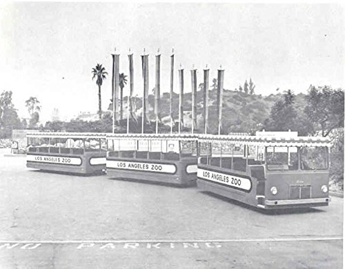 1967 Minibus Factory Photo Los Angeles Zoo