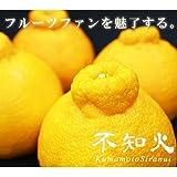 【 熊本県産 】 不知火柑 ( デコポンと同品種 ) (箱込 約5kg 15玉~22玉)