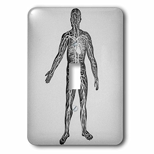 Scenes from the Past Magic Lantern Slides - Vintage Medical Study Glass Slide the Human Circulatory System 1900 - Light Switch Covers - single toggle switch (lsp_246877_1) by 3dRose