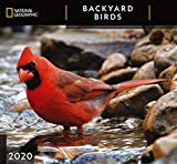National Geographic Backyard Birds 2020 Wall Calendar