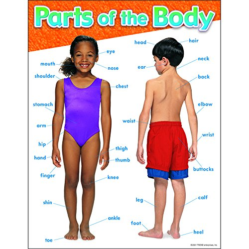 Trend Enterprises Parts of The Body Learning Chart (T-38048)