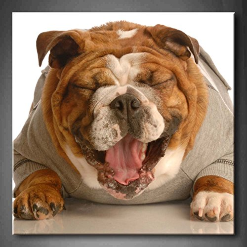 Bulldog Laying Down With Mouth Opening Laughing Wall Art