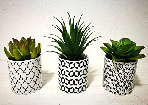 Pretty Home Potted Artificial Succulent Plants, Set of 3, Tile Pattern Pots ()