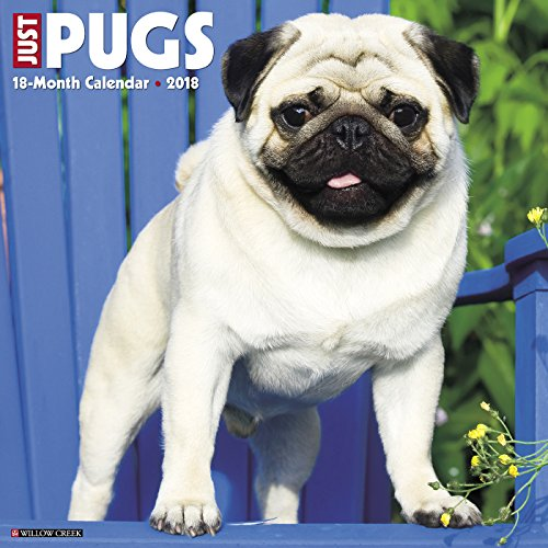 Pug Dog Breeds - 8