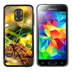 Smartphone Rígido Protección única Imagen Carcasa Funda Tapa Skin Case Para Samsung Galaxy S5 Mini, SM-G800, NOT S5 REGULAR! Nature Beautiful Forrest Green 44 / STRONG