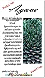 20 x Agave victoriae-reginae a.k.a Queen Victoria agave, royal agave Seeds - one of the most beautiful and desirable species - By MySeeds.Co