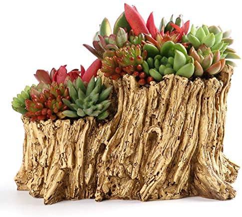 YAOHM Maceta de Plantas Creativas Decorada con Mini Jardín de Hadas y casa Dulce para Decoración de Vacaciones y Regalo: Amazon.es: Hogar