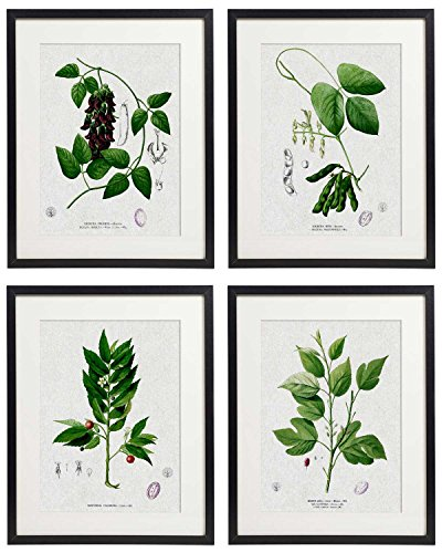 IDIOPIX Vintage Botanical Floral Print Art Home Wall Art Print No