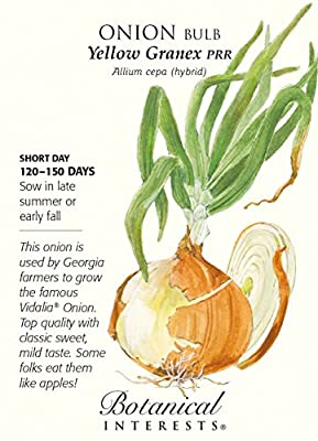 Yellow Granex Onion Seeds - 1 gram - Allium