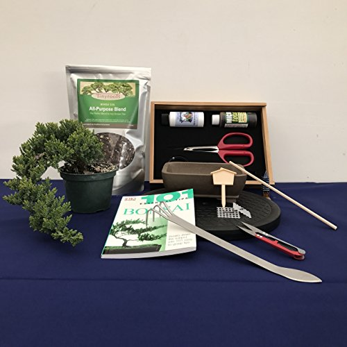 Create Your Own Bonsai Kit - Windswept Juniper Bonsai Tree - Perfect Bonsai Set for Beginners and Experts by BonsaiOutlet