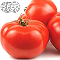 Plant produces good yields of extremely large juicy tomatoes. The tomato turns red when mature, is solid, and meaty. Excellent slicer, perfect for salads and sandwiches. Indeterminate.