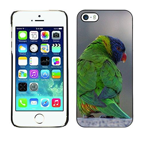 Premio Sottile Slim Cassa Custodia Case Cover Shell // F00014469 Loriquet oiseau // Apple iPhone 5 5S 5G