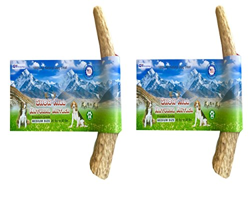 "(American Snow Hill Antler Dog Chews 2 Bulk Pack Elk Horn Antler Treats Whole, Size 5""-5.5"" for Medium Size Dog 20 to 40 lbs - 100% Natural Shed, Premium, Grade A)"