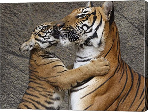 A Kiss For Mom by Galloimages Online Canvas Art